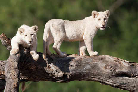 Premier Holidays - Ten nights South Africa tour including flights accommodation and a three night safari - Save 0%