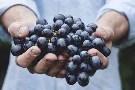 Hayloft Plants - Selection of Grape Plants With Free Delivery - Save 0%