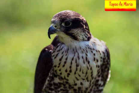 Tapas De Maria - Tapas and Falconry Experience - Save 50%