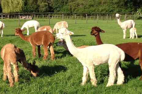 Pennybridge Alpacas - Alpaca Experience for Two, Four or Six  - Save 44%
