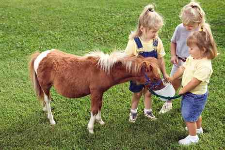 Fordbank Equi Centre - Two Hour Kids Pony Party For Eight Kids - Save 0%