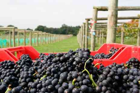 Bolney Estate - Vineyard Tour  Wine Tasting and Lunch for Two  - Save 0%
