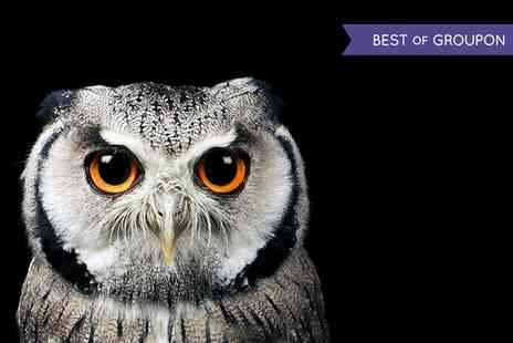 Riverside Falconry - Two Hour Owl and Hawk Experience - Save 58%