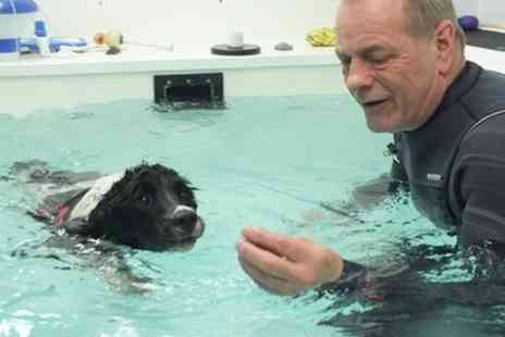 Wirral Canine Hydrotherapy Centre - Three Canine Hydrotherapy Sessions - Save 49%