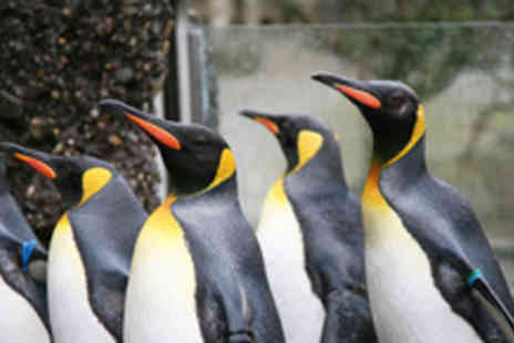 Blackbrook Zoological Park - Family pass for 2 adults and 2 children - Save 70%