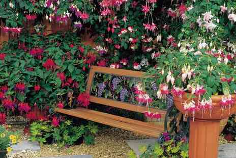Suttons Seeds - Fuchsia Trailing Collection With Free Delivery - Save 54%