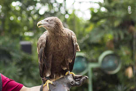 Simon Tebbutt Falconry - Two hour falconry experience for one person - Save 73%