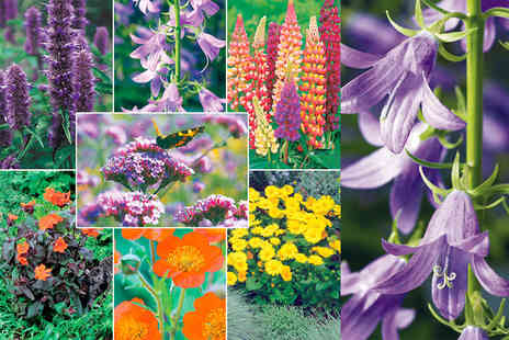 Dobies of Devon - Six or Twelve potted perennial plants - Save 69%