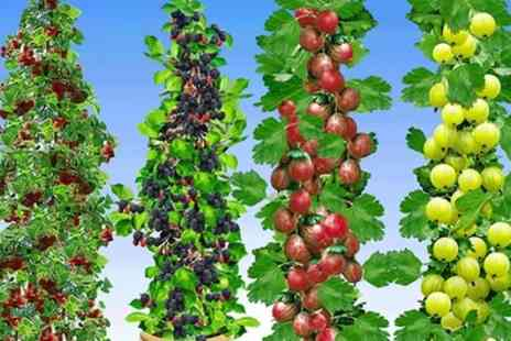 Garden Express - Five Fruit Plants Collection with Free Delivery - Save 60%