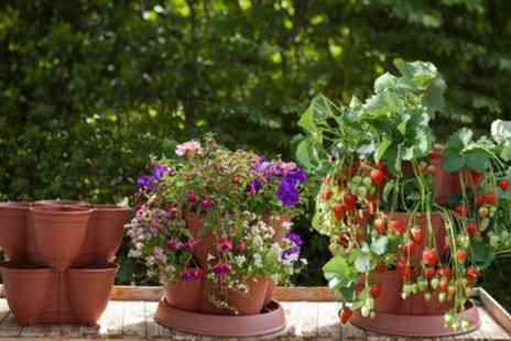 You Garden Limited - Strawberry Growing Pod System with Eight plants with Free Delivery - Save 17%