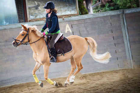 Croft Riding Centre - One hour adults introductory horse riding lesson  - Save 61%