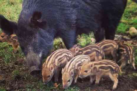 Bowland Wild Boar Animal Park - Seasons Pass for Child or Adult - Save 20%