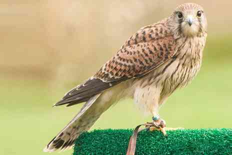 CJ S Birds of Prey - Two Hour Birds of Prey Experience for Child, Adult, Child and Adult or Family - Save 0%