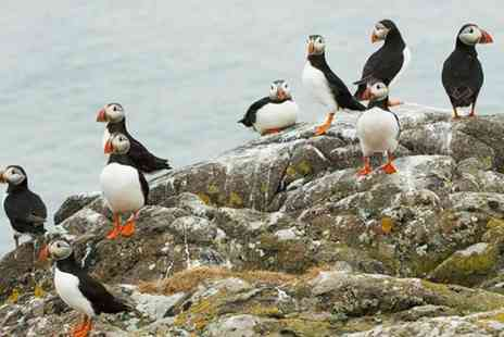 Anglesey Boat Trips - Seal and Puffin Watching Tour with Anglesey Boat Trips - Save 0%