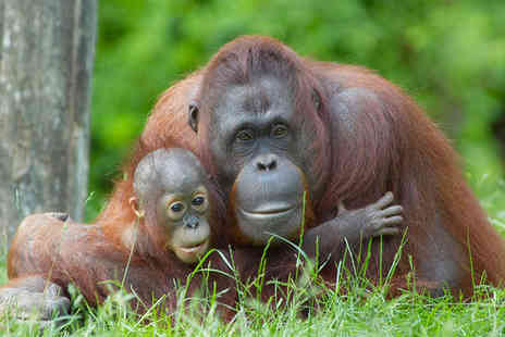 Discover Borneo - Two nights Stay in a Superior Room - Save 0%