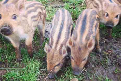 Bowland Wild Boar Animal Park - Park Keeper Experience for One or Two - Save 20%