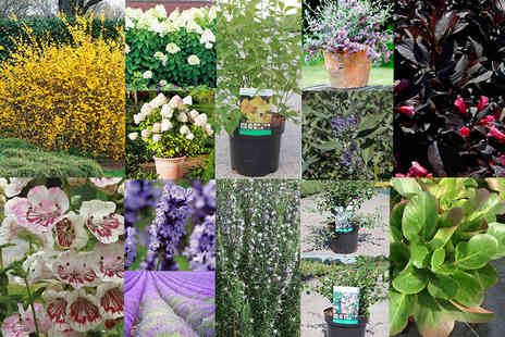 Dobies of Devon - Five potted shrubs or 15 receive a mixture of flowering varieties - Save 75%
