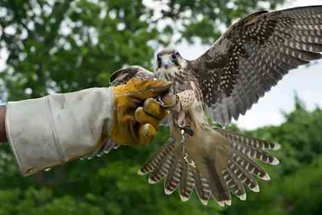 Birds of Prey Centre - Half Day Falconry, Archery and Shooting Experience - Save 69%