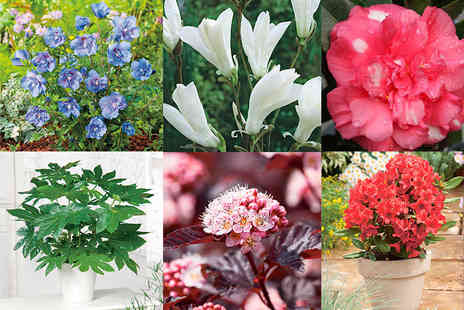 Dobies of Devon - Six randomly selected 2 or 3 litre potted shrubs - Save 72%