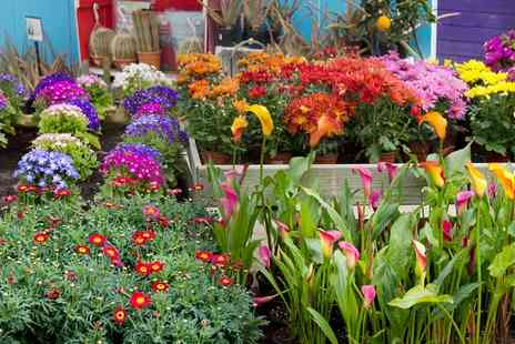 Lincolnshire County Flower show - Lincolnshire County Flower Show Entry for One or Two with Optional Lunch On 4 to 5 June - Save 60%