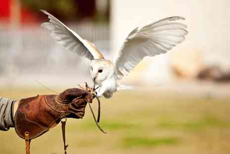 Rutland Falconry and Owl Centre - Two Hour Falconry Experience for One or Two - Save 72%