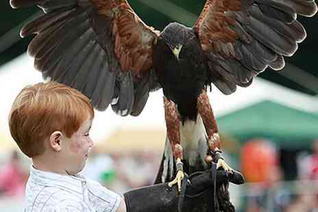 Fur and Feather - Bird of Prey and Exotic Animal Encounter with Cream Tea for One or Two - Save 60%