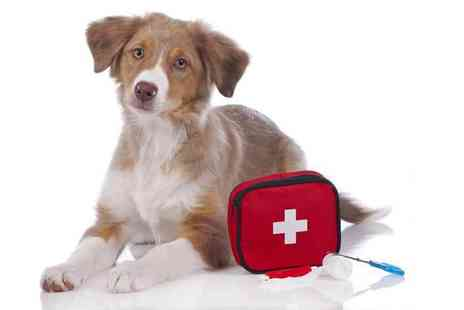Vet Nurse Direct - 12 months access to an online canine first aid diploma course and maybe even your dog - Save 58%