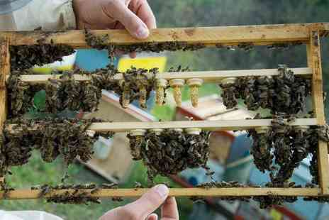 Local honey man - Beekeeping Experience for a Child or Adult with Lunch - Save 67%