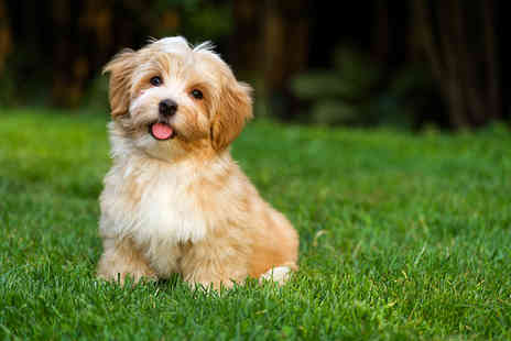 JD Courses - Online puppy training or dog behaviour and psychology course  - Save 95%