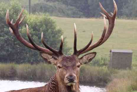Snettisham Park - Entry and Deer Safari for a Child, Adult or Family at Snettisham Park  - Save 44%