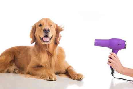 Soft Skills Courses - Accredited pet grooming online course - Save 94%