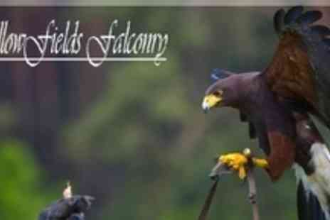 Fallowfields Falconry - Full Day Falconry Experience For Two With Lunch - Save 68%