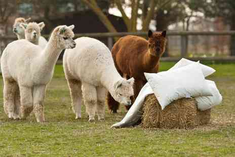Alpaca Annie - Alpaca Trek For Two or Four - Save 52%