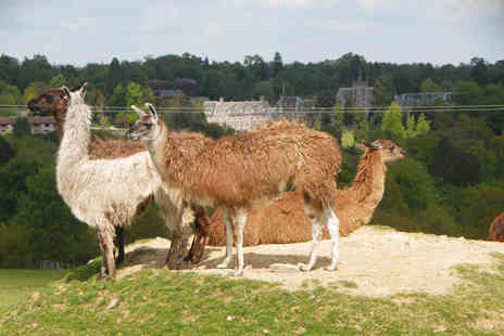 The Llama Park - Entry to The Llama Park for one adult and one child - Save 54%