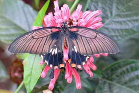 North Somerset Butterfly House -  Entry For Two or Family of Four at North Somerset Butterfly House - Save 36%