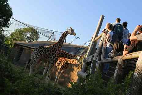 ZSL London Zoo - Sunset Safari for One Child or One Adult on 10 June  to  15 July  - Save 13%