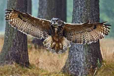 Riverside Falconry - Birds of Prey Experience or a Guided Hawk Walk - Save 58%