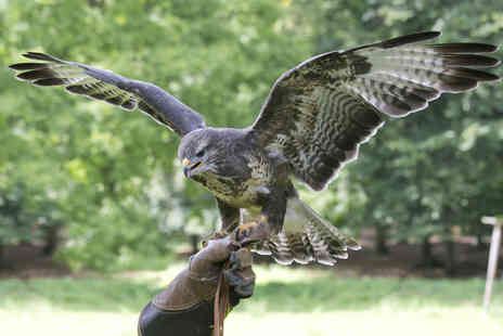 Lakeland Bird of Prey Centre - Entry plus a flight session with afternoon tea for two - Save 54%