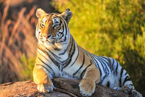 SuperBreak - Cheshire stay with breakfast and Cheshire Zoo tickets - Save 0%
