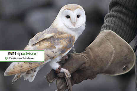 Hawks of Steele - Two hour falconry experience for one, two or four - Save 53%
