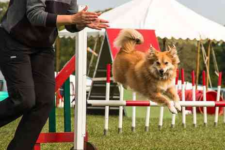 Crossgate Canines - One or Two 30 Minute Agility Lessons or One 60 Minute Agility Lesson - Save 60%