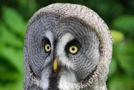 Scottish Owl Centre - Entry to the Scottish Owl Centre for two - Save 40%