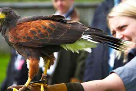 Coniston Hotel - Half Day Falconry Experience for Two - Save 45%