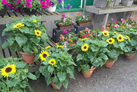 Hillmount Garden Centre - £10 for a £20 voucher to spend on garden plants  - Save 50%