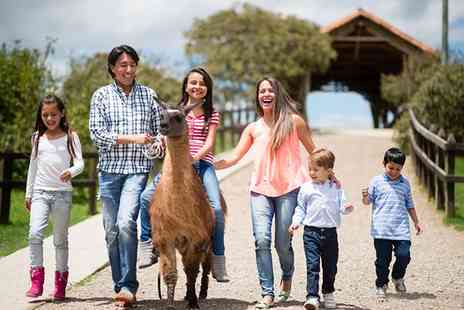Hilly Ridge Alpacas - One Hour Alpaca Experience - Save 13%