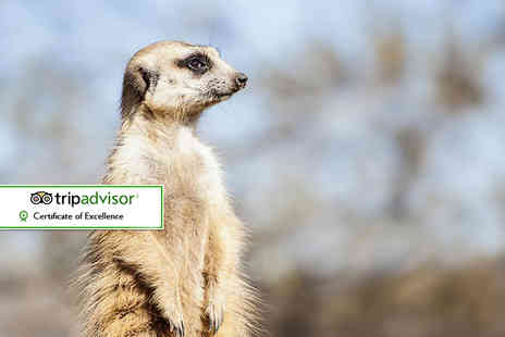 Kirkley Hall Zoological Gardens - Meerkat experience and zoological gardens entrance for one - Save 44%