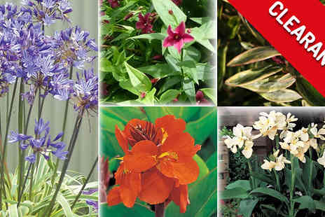 Jersey Plants Direct - End of Season Plant Clearance Free Delivery - Save 0%