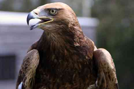 Yarak - Falconry Experience for One or Two - Save 57%
