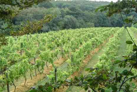 Sedlescombe Organic Vineyard - Vineyard Tour With 1 Night Stay and Breakfast - Save 0%