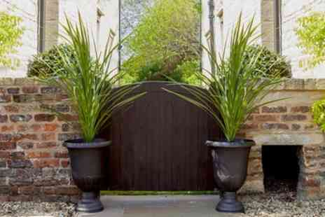You Garden Limited - Pair of Cordylines with Planters - Save 27%